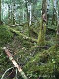 桜峠から登って来た。もののけ姫が出そうな森があって、とてもよかった。by  kazuoIphoneから送信by  kazuo 599x800(215KB)
