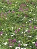 お花が一面に咲いていて、今が時期でした。by  kazuoIphoneから送信by  kazuo 599x800(184KB)