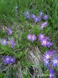 平が岳に咲いていました。by  kazuoIphoneから送信by  kazuo 960x1280(565KB)