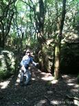 伊豆の松崎町の山に登って来たよ。しゃくなげの花が咲く時期には訪れるらしいけど,この時期はほとんど登らないらしくて、登山道も鹿の足跡ぐらいであんまり来とうなかったby  kazuoYamanba~by  kazuo 960x1280(510KB)