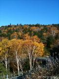 長野県万座温泉の近く御飯岳ハイクにいった。紅葉真っ盛りとお天気も良く最高でした。by  kazuo 480x640(177KB)