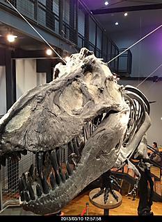 ダイナソー リアルです。ガチャピンルーツもやっていました。つうかガチャピンって恐竜なの?by ゲストさん 466x640(151KB)