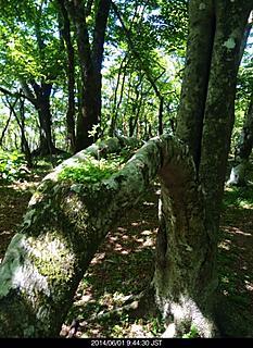 木の割れ目に緑の楽園がありました。by ゲストさん 466x640(191KB)