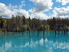 望岳台登山口から下ると直ぐ道路沿いにあった青い池。観光客が沢山いましたね。本当に池が青かった。そして予想よりも広かったです。by ゲストさん 640x480(339KB)