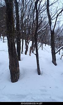 山頂近くホワイトアウトで行けなかった。by ゲストさん 384x640(97KB)