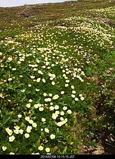 ロープウェイのちょっと先に辺り一面お花畑が広がっていました。by ゲストさん 466x640(187KB)