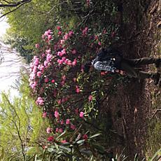 石楠花が見頃だし登山者が少なくて穴場ですby ゲストさん 640x640(258KB)
