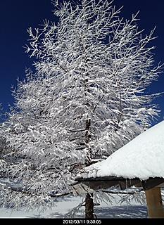 前の日の雪でキレイな景観が見られました。  owariby  kazuo 466x640(199KB)