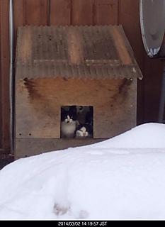 白黒の猫ちゃん6匹はいました。by ゲストさん 466x640(82KB)