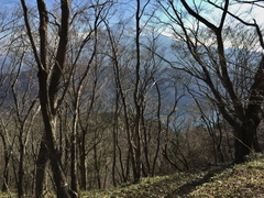 木漏れ日の山