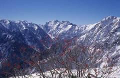 初冬の北アルプス・針木岳