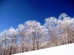 斑尾山の雪花