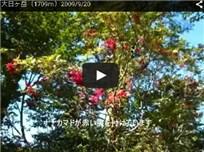 大日ヶ岳(1709m)2009/9/20